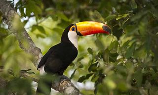 Brazil'S Natural Highlights