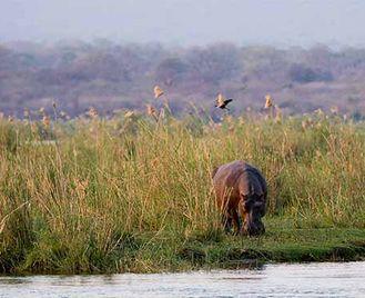 Distinctive Zimbabwe & Kafue