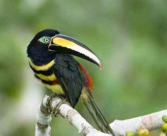 Ecuadorian Odyssey