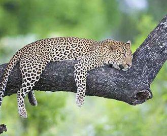 Luangwa Valley & Lower Zambezi