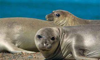 Patagonia'S Marine Life