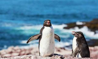 Patagonia Wildlife Adventure