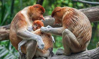 Sabah Wildlife Special
