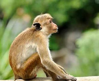 Sri Lanka Wildlife & Culture