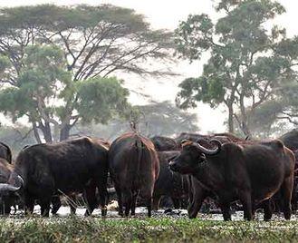 Tanzania'S Wild West