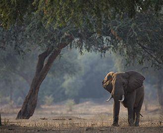 Wild Zimbabwe