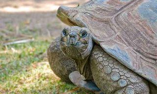 Wildlife Of Ecuador & The Galapagos