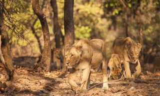 Wilds Of Gujarat