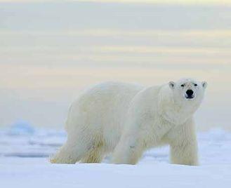 Around Spitsbergen