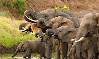 Highlights Of Northern Botswana