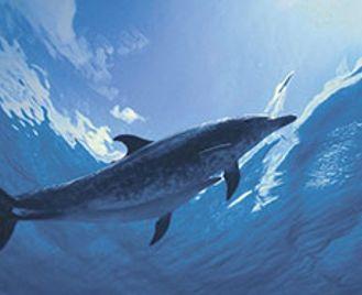 Sperm Whales & Bottlenose Dolphins