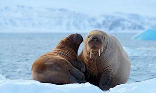 Spitsbergen, Greenland & Iceland