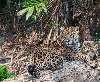The Pantanal: Brazil'S Wetland Wonder