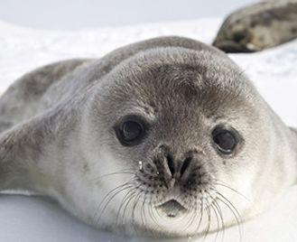 Weddell Sea Explorer