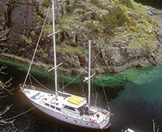 Whales & Dolphins In The Haida Gwaii