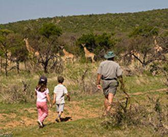 Treasures Of Limpopo