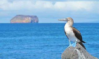 Galapagos & Ecuador In Style