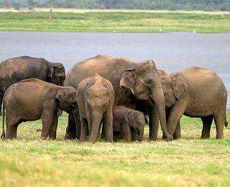 Elephants, Blue Whales & Leopards