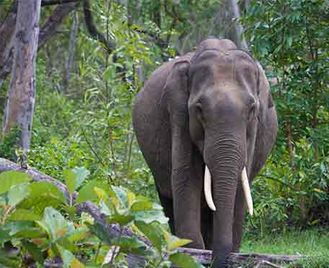 Jungle Trails Of Southern India