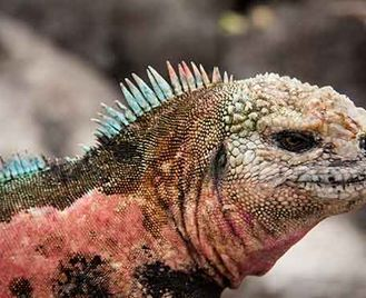 Galapagos: 8 Day First Class Highlights Fernandina Itinerary – Beluga Or Mary Anne