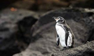 Galapagos: 8 Day Deluxe Western Islands – Anahi