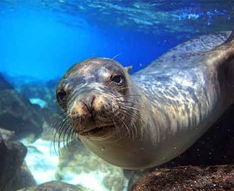 Galapagos: 4 Day Deluxe Eastern Islands - Anahi