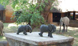 South Luangwa Wildlife Art Safari