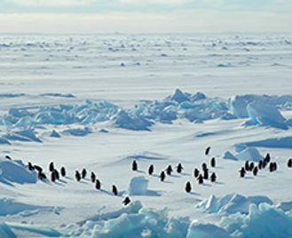 Antarctic Odyssey Fly-Sail