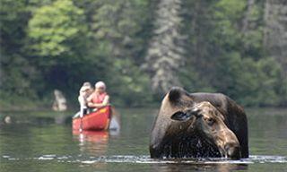 Wilderness Quebec