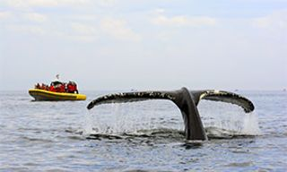 Whales Of Tadoussac & Saguenay Fjord