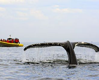 Whales Of Tadoussac & Saguenay Fjord