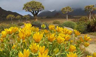 Spring Flowers From The Cape To The Kalahari