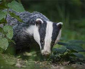 Badger Photography Workshop