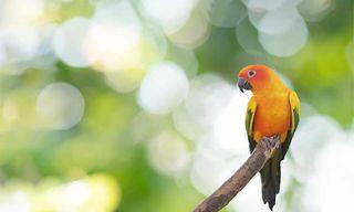 Ultimate Guyana Nature Experience