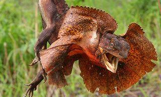 Kakadu Wildlife Bonanza