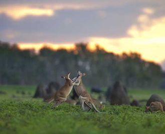 Wildlife Of Kimberley & Bamurru Plains