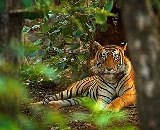 Jungles, Tigers & Taj