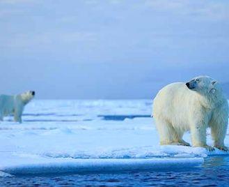 Festival Of Wildlife Spitsbergen