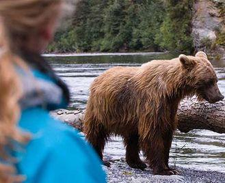 Bears & Orcas Up Close
