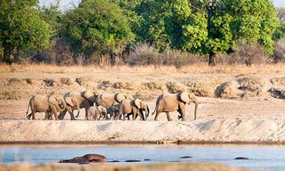 Sacred Combe Safari