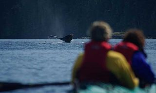 Kayaking With Whales & Grizzlies