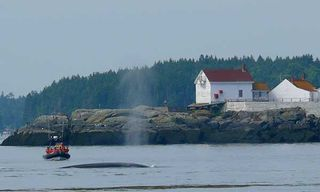 Whales Of The Bay Of Fundy Self-Drive