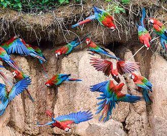 Amazon'S Secrets: Rainforest Photography