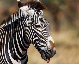Samburu & Masai Mara Safari