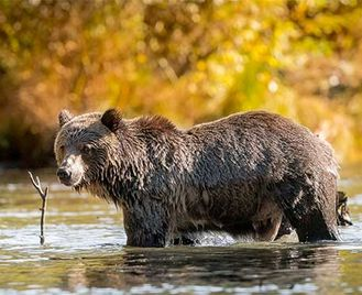 Walking With Bears & Whale Watching