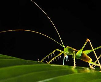 Bugs 'N' Beasts Indoors: Photography Workshop