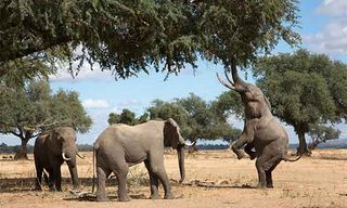 On The Trail Of Elephants