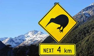 Kiwis & Whales Galore: South Island Self-Drive