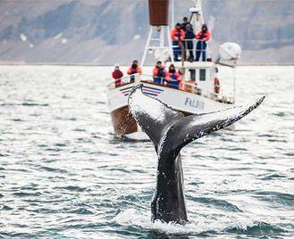 Iceland'S Natural Wonders Self-Drive