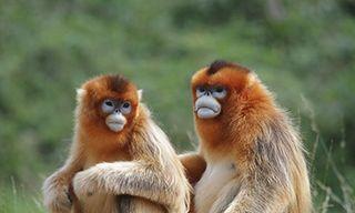 Sichuan'S Sensational Mammals & Birds